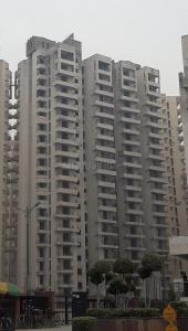 Gallery Cover Image of 890 Sq.ft 2 BHK Apartment for rent in Noida Extension for 7000
