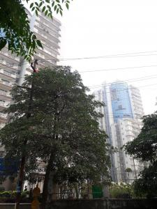 Gallery Cover Image of 1620 Sq.ft 3 BHK Apartment for rent in Amrapali Eden Park, Sector 50 for 23000
