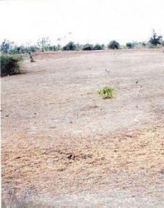 Gallery Cover Image of 25000 Sq.ft Residential Plot for buy in Ayodhya Nagar for 10000000