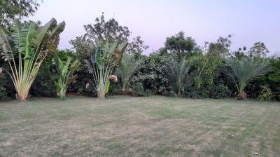Gallery Cover Image of 4840 Sq.ft Residential Plot for buy in Sector 21B for 7000000