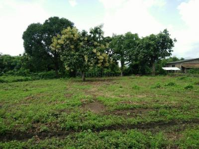 1000 Sq.ft Residential Plot for Sale in Vasai West, Mumbai