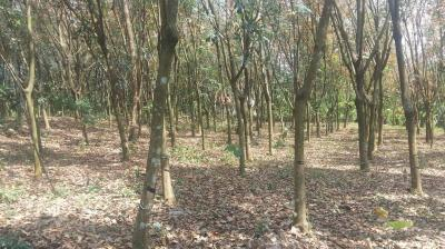 6100 Sq.ft Residential Plot for Sale in Perumbavoor, Kochi