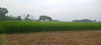 18000 Sq.ft Residential Plot for Sale in Krishnanagar, Nadia