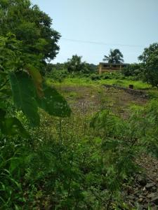 Gallery Cover Image of  Sq.ft Residential Plot for buy in Kihim for 25000000