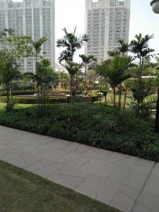 Gallery Cover Image of 1750 Sq.ft 3 BHK Apartment for rent in Sector 150 for 24000