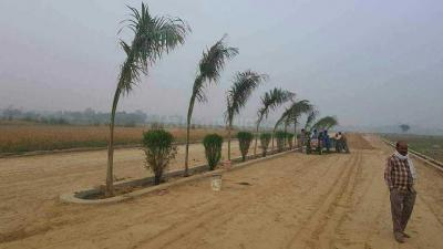 1000 Sq.ft Residential Plot for Sale in Nohsa, Patna