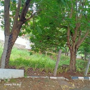2000 Sq.ft Residential Plot for Sale in Jubilee Hills, Hyderabad
