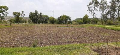 Gallery Cover Image of  Sq.ft Residential Plot for buy in Bhanpur for 10000000