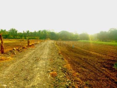 Gallery Cover Image of 2900 Sq.ft Residential Plot for buy in Wakodi for 4275000
