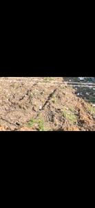 300 Sq.ft Residential Plot for Sale in Raghunathapally, Hyderabad
