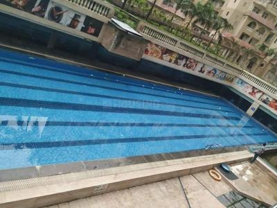 Swimming Pool Image of 1 Room Available In 3 Bhk in Sector 45