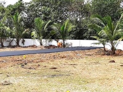 966 Sq.ft Residential Plot for Sale in Thiruverkkadu, Chennai