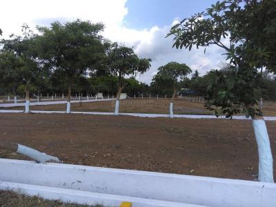 260 Sq.ft Residential Plot for Sale in Kolamuru, Rajahmundry