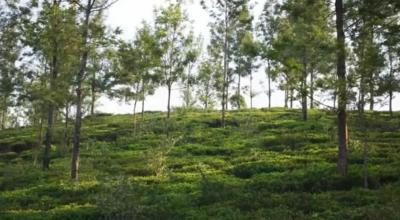 9000 Sq.ft Residential Plot for Sale in Lovedale, Nilgiris