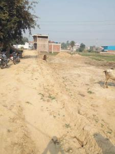 1000 Sq.ft Residential Plot for Sale in Gomti Nagar, Lucknow
