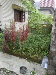 2160 Sq.ft Residential Plot for Sale in Nawada, Dehradun