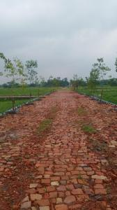 1440 Sq.ft Residential Plot for Sale in Pailan, कोलकाता