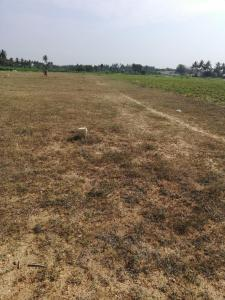 Gallery Cover Image of  Sq.ft Residential Plot for buy in Annur for 3300000