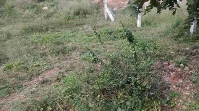 600 Sq.ft Residential Plot for Sale in Hemmigepura, Bangalore