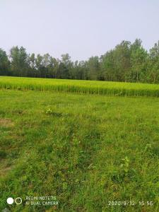 1200 Sq.ft Residential Plot for Sale in Chinhat Tiraha, Lucknow