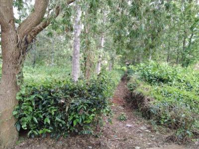 10000 Sq.ft Residential Plot for Sale in Coonoor, Nilgiris