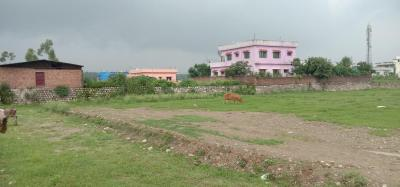 Gallery Cover Image of 900 Sq.ft Residential Plot for buy in Majra for 1100000