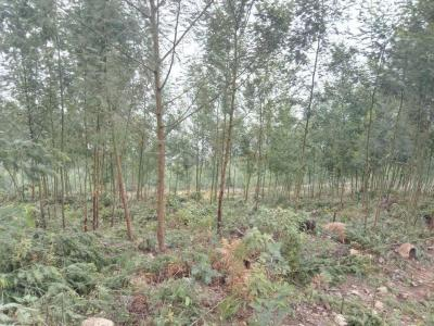 10000 Sq.ft Residential Plot for Sale in Kodaikanal, Dindigul