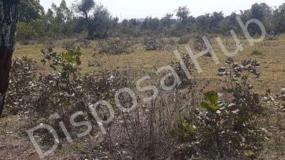 Gallery Cover Image of 1000 Sq.ft Residential Plot for buy in Khamaria for 200000
