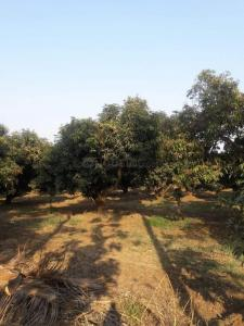 Gallery Cover Image of  Sq.ft Residential Plot for buy in Abrama Village for 100000000