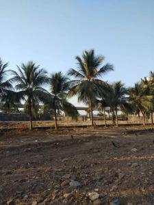 1000000 Sq.ft Residential Plot for Sale in Kandivali West, Mumbai