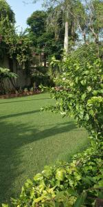 1850 Sq.ft Residential Plot for Sale in Sainik Farm, New Delhi