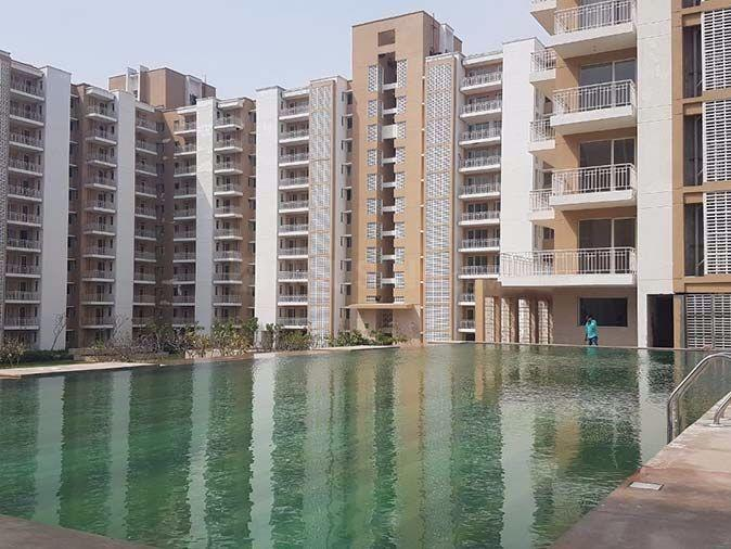 Swimming Pool Image of 1400 Sq.ft 3 BHK Apartment for rent in Sector 84 for 15000