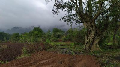 7700 Sq.ft Residential Plot for Sale in Jambrung, Thane