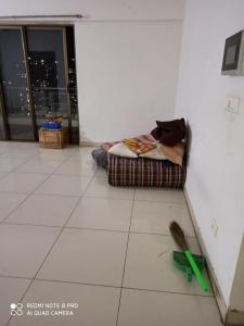 Gallery Cover Image of 1040 Sq.ft 2 BHK Apartment for rent in Blue Ridge Tower B6, Hinjewadi for 21000