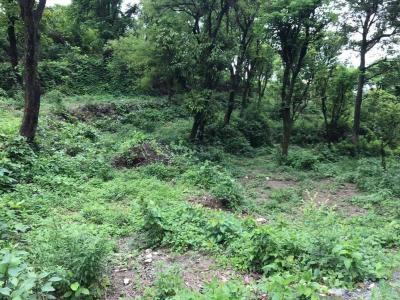 8100 Sq.ft Residential Plot for Sale in Bhagwant Pur, Dehradun