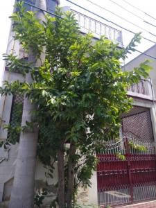 Gallery Cover Image of 1700 Sq.ft 3 BHK Independent House for buy in Shastri Nagar for 5700000