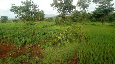 Gallery Cover Image of  Sq.ft Residential Plot for buy in Boisar for 350000