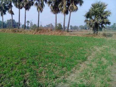 1200 Sq.ft Residential Plot for Sale in Phulwari Sharif, Patna