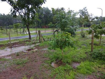 Gallery Cover Image of  Sq.ft Residential Plot for buy in Vakas for 2000000
