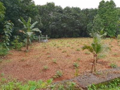 14800 Sq.ft Residential Plot for Sale in Thiruvaniyoor, Kochi