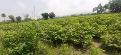 2700 Sq.ft Residential Plot for Sale in Mount Abu, Sirohi