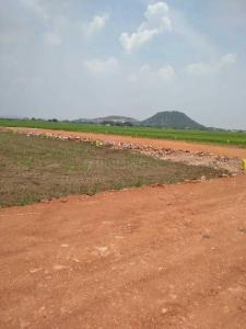 Gallery Cover Image of  Sq.ft Residential Plot for buy in Ramavarapadu for 1350000