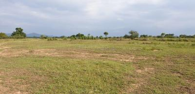 Gallery Cover Image of  Sq.ft Residential Plot for buy in Gamharia for 120000000