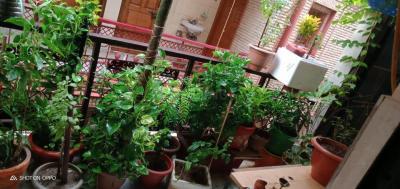 Balcony Image of Triveni PG in Sector 7 Rohini