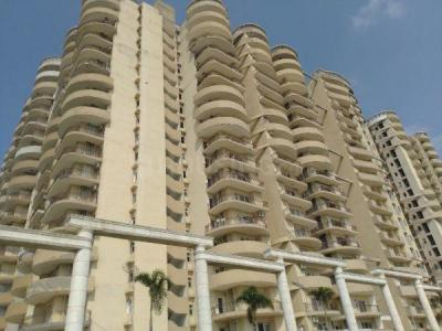 Gallery Cover Image of 1250 Sq.ft 2 BHK Apartment for rent in Victory Central, Noida Extension for 5500
