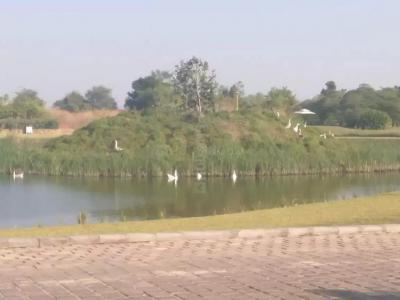 415 Sq.ft Residential Plot for Sale in Jesangpura, Ahmedabad