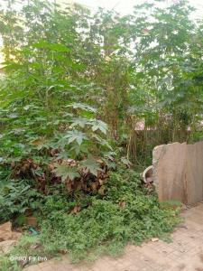 2385 Sq.ft Residential Plot for Sale in Kaggadasapura, Bangalore