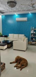 Gallery Cover Image of 1540 Sq.ft 3 BHK Independent Floor for buy in Sector 49 for 4000000
