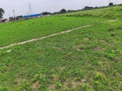 20000 Sq.ft Residential Plot for Sale in Olandganj, Jaunpur