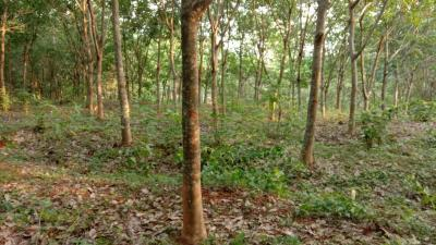 80000 Sq.ft Residential Plot for Sale in Thiruvilwamala, Palakkad